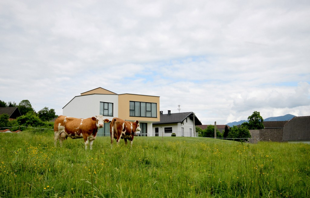 Kühe2-klein